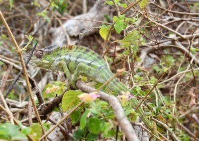 Les habitants de la forêt-mazavaloha-ecole-kite-mer-emeraude-madagascar