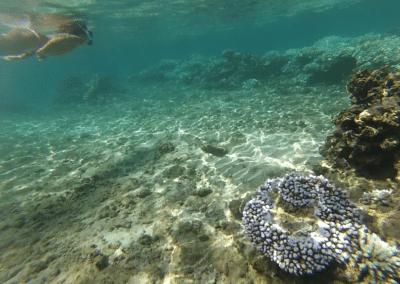 palme masque tuba à la piscinecarte-randonnées-mazavaloha-ecole-kite-mer-emeraude-madagascar- mer d'émeraude